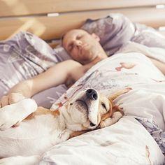 Сон с домашними животными полезен для здоровья человека