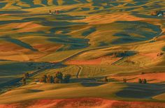 Palouse wheat fields sunrise - Another view of North America's answer to Tuscany. - the Palouse wheat field from Steptoe butte at sunrise. The light and rolling hills are increadable here in summer. Fine Art Photography, Landscape Photography, Travel Photography, Sunrise Landscape, Wheat Fields, Photos Of The Week, Nature Pictures, Landscape Photos, Places To Visit