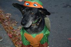Slideshow: Dogs Dressed Up For Halloween, Too