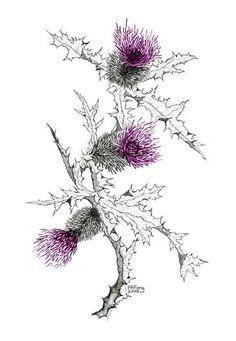 scottish thistle and peony tattoo Botanical Drawings, Botanical Illustration, Botanical Prints, Watercolor Flowers, Watercolor Art, Scotland National Flower, Scottish Thistle Tattoo, Arte Floral, Flower Tattoos