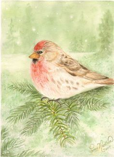 """Finch and Flurries"", 9"" x 12"" watercolor by Peggy Markham"