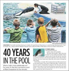 URGENT: Help Lolita. End Killer Whale Captivity. Instruccions: http://endkillerwhalecaptivity.tumblr.com/post/53325600665/help-lolita @Sea Shepherd Conservation Society #defendconserveprotect