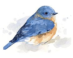 Bluebird Watercolor Art Print Contemporary by WildlifeGardenerArt