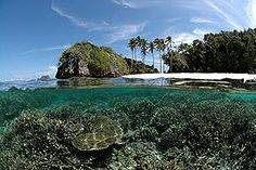 Wide-angle 1st Place Annelise Hagan, United Kingdom Raja Ampat, West Papua, Indonesia  Underwater Photography Contest: 2010 Winners | The Rosenstiel School of Marine and Atmospheric Science at the University of Miami