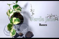 Kokedama Pothus Blanco Base de Metal Consultas: eve@verdejade.com www.VerdeJade.com