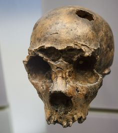 Neanderthal man arrived on the Italian peninsular some years earlier than previously thought, according to a study set to be published this month.The discovery was made after researchers … Aliens And Ufos, Ancient Aliens, Ancient History, Ancient Mysteries, Ancient Artifacts, Homo Heidelbergensis, Early Humans, Human Evolution, Archaeology News
