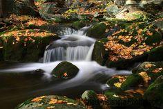 Fall water flow by Michael Malandra