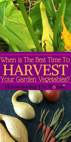 When is the best time to harvest your garden vegetables