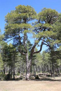 Tierra Muerta: naturaleza para los cinco sentidos