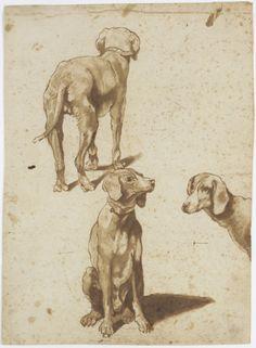 Giovanni Domenico Tiepolo,(attr.), Dog studies,1751/1800.Wallraf-Richartz-Museum, Cologne & Fondation Corboud, Source