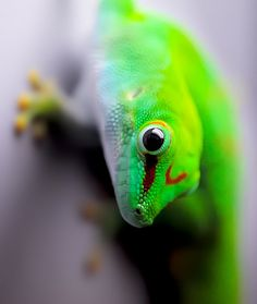 Day gecko!