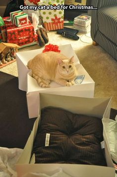 funny pictures of cats   My cats love boxes for laying on,in or scratching at. They also prefer the dogs bed to their own!
