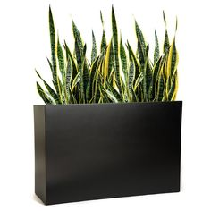 When your design calls for large planters, choose these PurePots rectangle cube planters. These tall modern planters come in a variety of colors & 3 sizes. Fiberglass Planters, Metal Planters, Modern Planters, Outdoor Planters, Planter Accessories, Fire Pit Accessories, Large Planter Boxes, Large Planters, Outdoor Fire Table