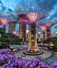 Super Tree Groove - Singapore Picture by . for a feature - via Wonderful Places on : Amazing Destinations - International Tips - Dream - Exotic Tropical Tourist Spots - Adventure Travel Ideas - Luxury and Beautiful Resorts Pictures by Singapore Garden, Singapore City, Singapore Travel, Travel Abroad, Asia Travel, Travel Trip, Adventure Travel, Travel Destinations, Beautiful Places To Visit