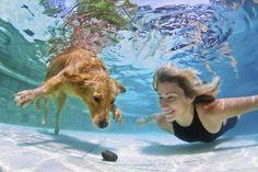 Legado olímpico: 3 esportes para praticar junto com o seu cão