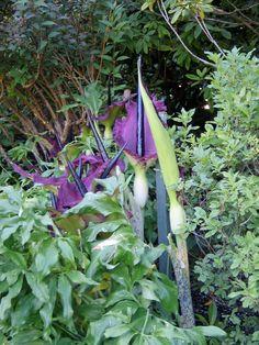 More amazing colours Sunken Garden, Italian Garden, 19th Century, Gardens, Colours, Amazing, Plants, Outdoor Gardens, Plant