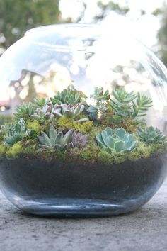 Hey, I found this really awesome Etsy listing at http://www.etsy.com/listing/96738510/another-world-succulent-garden-terrarium