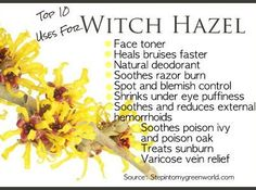Top 10 uses for witch hazel - I use it as a facial toner...love it.
