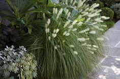Plant textures .#peterfudge