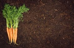 raw natural vegetables food carrots top view natural soil background