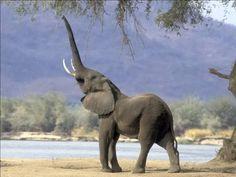 как нарисовать слона с поднятым хоботом - Поиск в Google