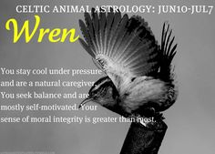 celtic animal astrology