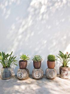 outdoor, decorar con plantas y cactus