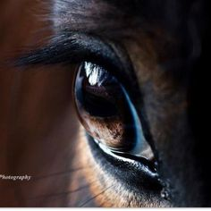 Pretty horse eye. Equine horse pony equestrian caballo pferde equestrian stallion gelding mare foal
