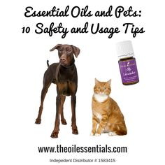 Essential Oils and Pets: 10 Safety and Usage Tips
