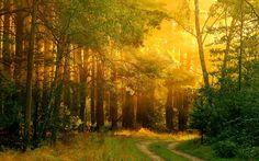 golden_forest_branches_quiet_glow_lovely_hd-wallpaper-1572525.jpg (1920×1200)