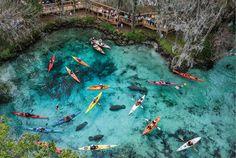 """Florida; De Three Sisters Springs is een schitterende warmwaterbron in het hart van de Crystal River die ook wel wordt omschreven als """"An Environmental Jewel"""". En die omschrijving slaat de spijker op zijn kop: wat een prachtplek in Florida!"""