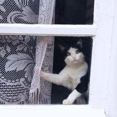 """Résultat de recherche d'images pour """"chat noire drôle"""""""