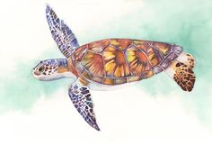 Sea Turtle print of watercolour painting ST3215  by LouiseDeMasi