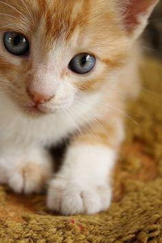 Precious #kitten http://fourleggedloves.com