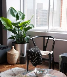 Fast Fixes for Ugly Houseplants - Zillow Digs