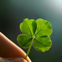 Be other's 4 leaf clover