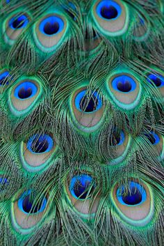 """Trust me with this one. Take an ordinary (if even applicable) peacock feathers and lightly spray them with gold paint. Work them into any arrangement. EVERYONE will stop and gab about how incredible they look! You just sit back and be like, """"oh that?"""""""
