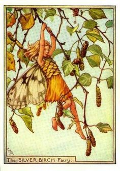 Silver Birch Flower Fairy » Flower Fairy Prints- Vintage Fairy Prints by Cicely Mary Barker for sale