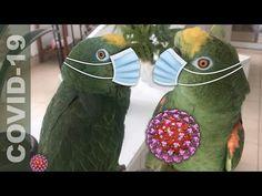 Happy Birthday Pictures, Happy Birthday Funny, Bird Food, Happy Saturday, Pet Birds, Parrot, Funny Animals, Dinosaur Stuffed Animal, Pets