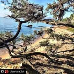 by http://ift.tt/1OJSkeg - Sardegna turismo by italylandscape.com #traveloffers #holiday | #Repost @gianluca_loi with @repostapp.  03 feb 2016 #IsMorusRelais#Sardinia#SouthSardinia#summer#beautiful#sea#sun#nature#golf#holiday#resort#Sardegna#instasardegna#ig_sardegna#igersardegna#igeritalia#instadaily#ig_sardinia#sardegnagram#lanuovasardegna#mare#sole#estate#natura#vacanze#danoièsempreestate#unoasidipace Foto presente anche su http://ift.tt/1tOf9XD | February 03 2016 at 10:15AM (ph…