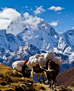Moving is stressful but it could be worse...you could be using pack mules. Moving on -- Nepal