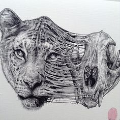 """culturenlifestyle: """"Stunning & Dark Drawings of Animals' Skeletons Emerging From Their Skin by Paul Jackson Toronto-based artist Paul Jackson illustrates detailed pen and pencil sketches with a. Animal Skull Drawing, Cute Animal Drawings, Panda Drawing, Drawing Animals, Skeleton Drawings, Skeleton Art, Skull Drawings, Pencil Drawings, Animal Skeletons"""