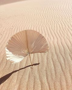 """LA PALMS Collection on Instagram: """"""""Simplicity is the heart of everything. If you look to the desert, apparently the desert is very simple but it's full of life, it's full of…"""" Hand Fan, Palm, Deserts, Simple, Collection, Instagram, Postres, Dessert, Hand Prints"""