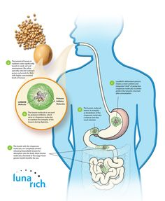 Reliv products are readily absorbed due to the powder form.  It is ready to be used by the cells.  This is Bioavailability. Reliv has developed LunaRich soy with high content of the key to health benefits — from heart health to weight loss.  Multiplied Power!  Readily Absorbed!   CLICK PHOTO to learn more.