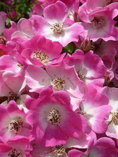 Gartenkraut: Blüten
