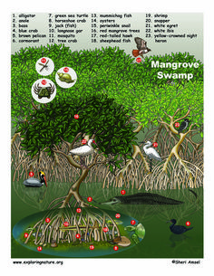 what live in mangrove forest