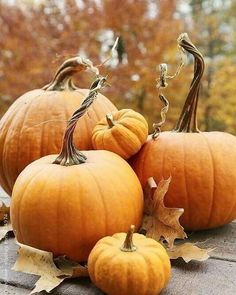 It's National Pumpkin Day! Carve, bake and eat this favored autumn decoration and food!