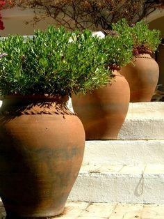 kübelpflanzen garten gestalten außentreppe dekorieren