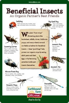 """""""To an organic farmer, not all insects are created equal! Beneficial insects are extremely important allies in our fight against crop-damaging pests. Here are some of the beneficial insects we use, and the pests they prey on. Garden Bugs, Garden Insects, Garden Pests, Easy Garden, Organic Gardening Tips, Organic Farming, Organic Soil, Compost, Horticulture"""