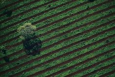 Planted fields, Misiones province, Argentina - photo by Yann Arthus-Bertrand